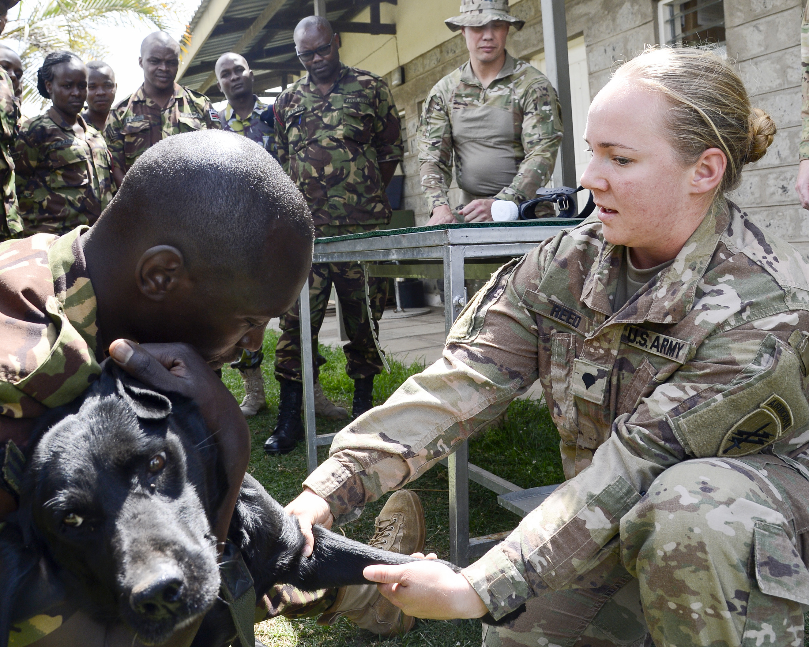 U.S. Army Spc. Lauren Reed, a veterinary technician with the 404th Civil Affairs Battalion Functional Specialty Team, demonstrates the proper restraint technique to administer a catheter to memebers of the Kenya Defense Force's 1st Canine Regiment during a Military Working Dog knowledge exchange in Nairobi, Kenya, August 7, 2018. The exchange gave a chance for American and Kenyan forces to learn and work with each other to have a better understanding of each other's capabilities. (U.S. Navy Photo by Mass Communication Specialist 2nd Class Timothy M. Ahearn)